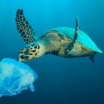 tartaruga plastico